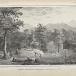 Maleisch boschveld te Habalang, in de Lawut-landen